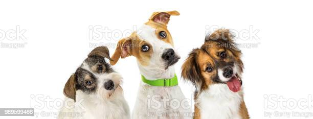 Three cute dogs tilting heads looking forward picture id989599466?b=1&k=6&m=989599466&s=612x612&h=o3bq92iq9tg8efupnirhja73qnevht3syb6ftm ugr4=