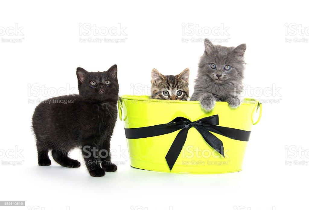 Three cute kittens on white background stock photo