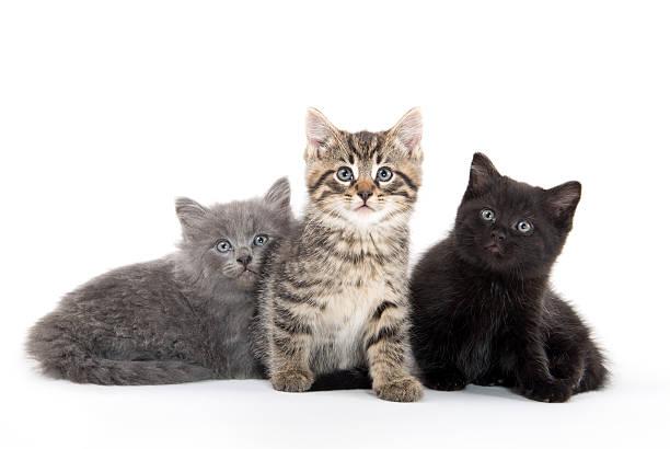 Three cute kittens picture id497307160?b=1&k=6&m=497307160&s=612x612&w=0&h=fieypie3npfanplbapcjogexrxz iaheyt4bg1nhgpc=