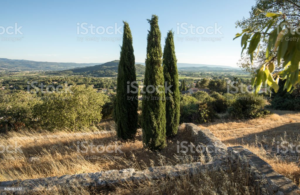 Three cypresses in  in Saint-Saturnin-les-Apt Muehle in Provence. France stock photo