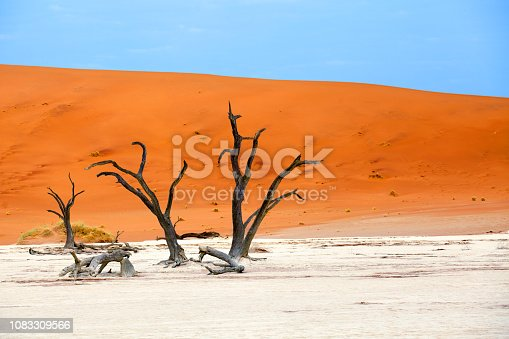 1083309578 istock photo Three dead dry trees on orange sand dunes and bright blue sky background landscape, Naukluft National Park Namib Desert, Namibia 1083309566