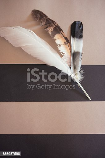 istock Three different bird feathers on stripes background 866987596