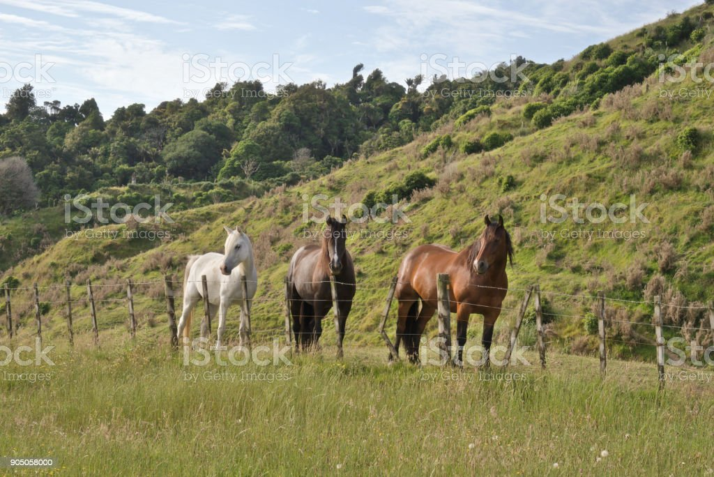 Three different color horses standing near fence stock photo
