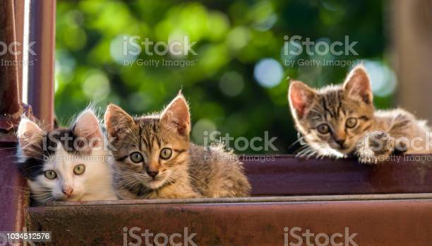 Three different kitten on a natural background summer shot selective picture id1034512576?b=1&k=6&m=1034512576&s=612x612&h=xe7bsk7wqpct1shhzohlq7nimhgixgduco7kijnjeey=