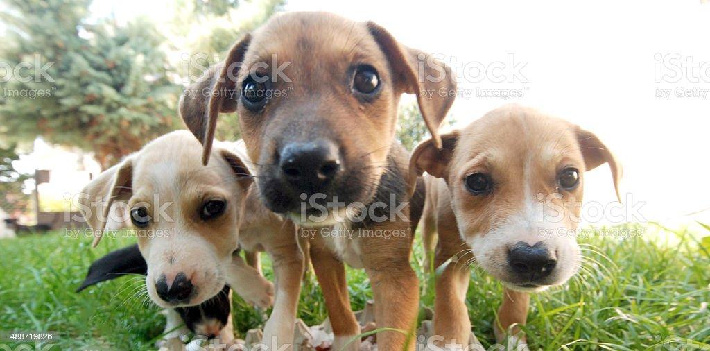 Three dog Morgen - Lizenzfrei 2015 Stock-Foto