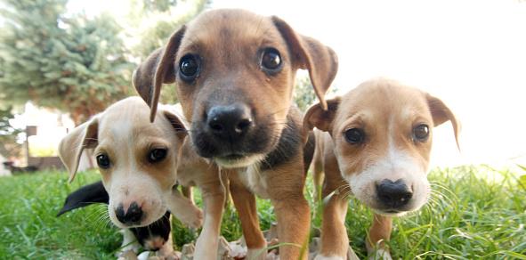 Three Dog Morgen Stockfoto und mehr Bilder von 2015