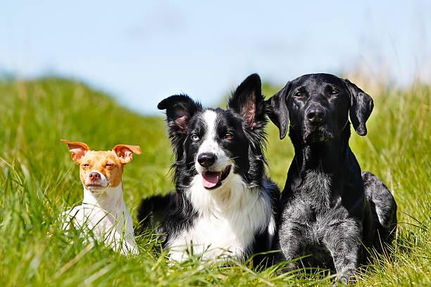 three dogs - safkan köpek stok fotoğraflar ve resimler