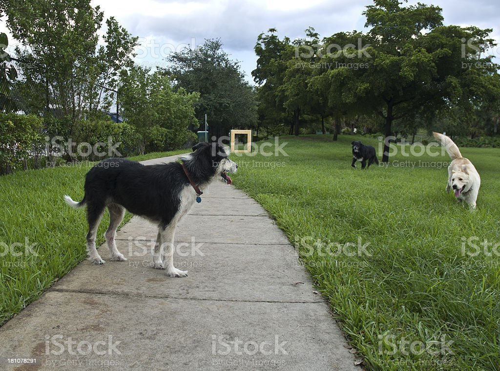 Three Dogs Playing At A Dogpark royalty-free stock photo