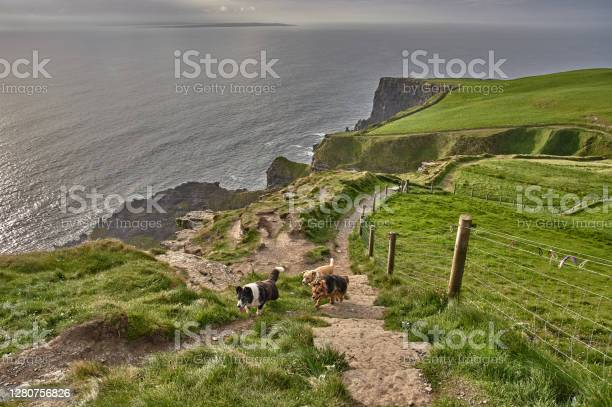 Photo of Three dogs walking along the cliffs of moher during sunset. Dogs walking at the cliffs of moher, Ireland.