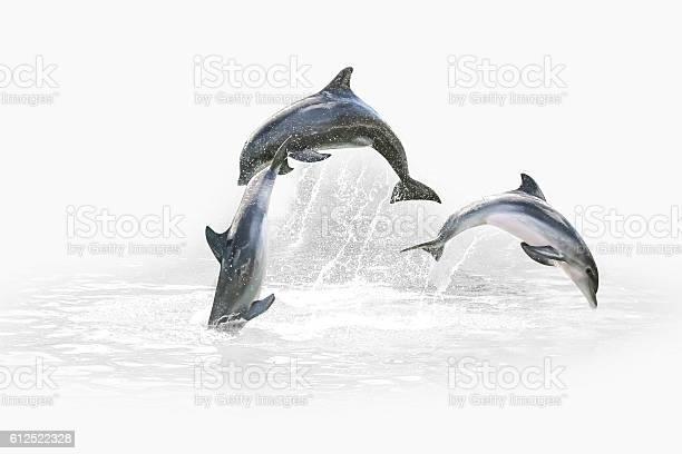 Three dolphin jumping picture id612522328?b=1&k=6&m=612522328&s=612x612&h=hyvtilgvzjj eglgazukgh5qkraoqejhquo3esdypy8=
