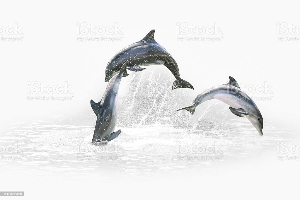 Three Dolphin jumping stock photo