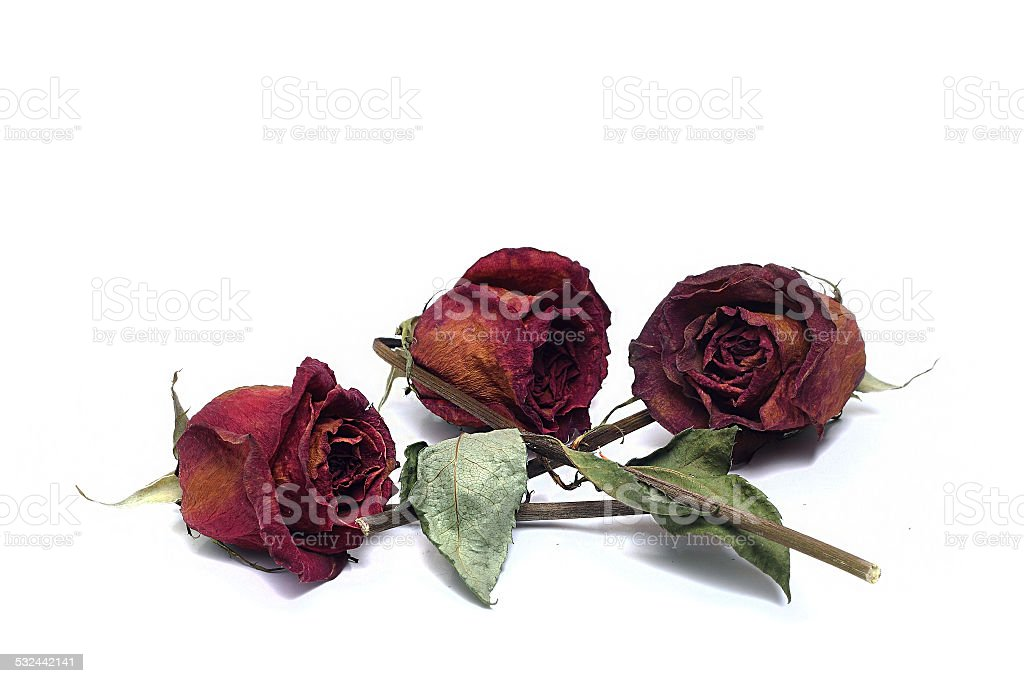 three dried roses on a white background