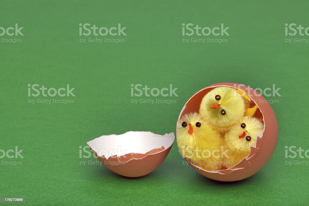 Three easter chicks in an egg shell royalty-free stock photo