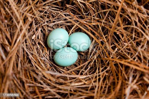 Three Eastern Bluebird eggs in a nest box.