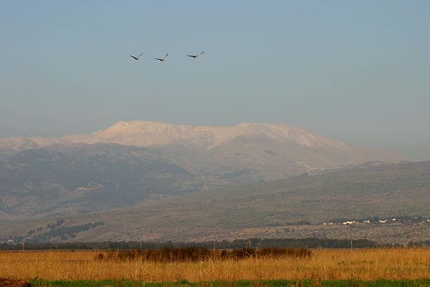 Three Eurasian cranes Mount Hermon Hula valley Israel stock photo