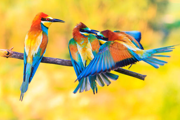 three exotic colored birds biting on the branch stock photo