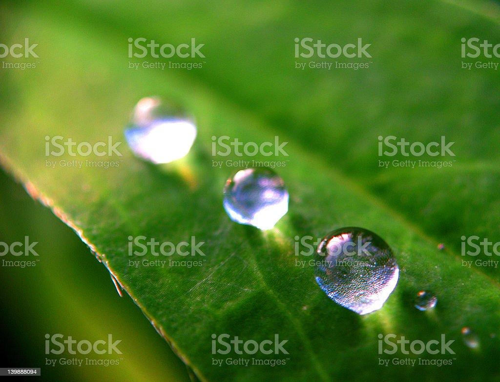 Three Extreme Raindrop Closeups royalty-free stock photo
