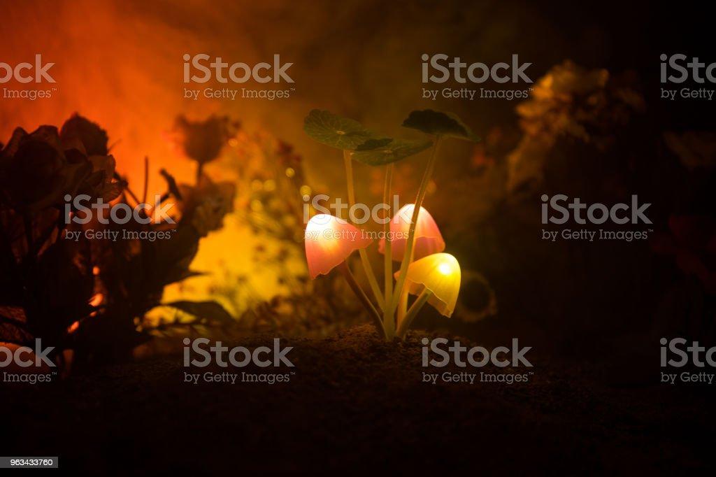 Three fantasy glowing mushrooms in mystery dark forest close-up. Beautiful macro shot of magic mushroom or three souls lost in avatar forest. Fairy lights on background with fog. - Zbiór zdjęć royalty-free (Azerbejdżan)
