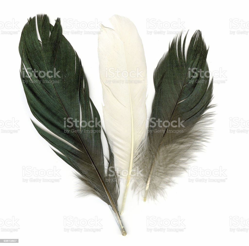 Three feathers royalty-free stock photo
