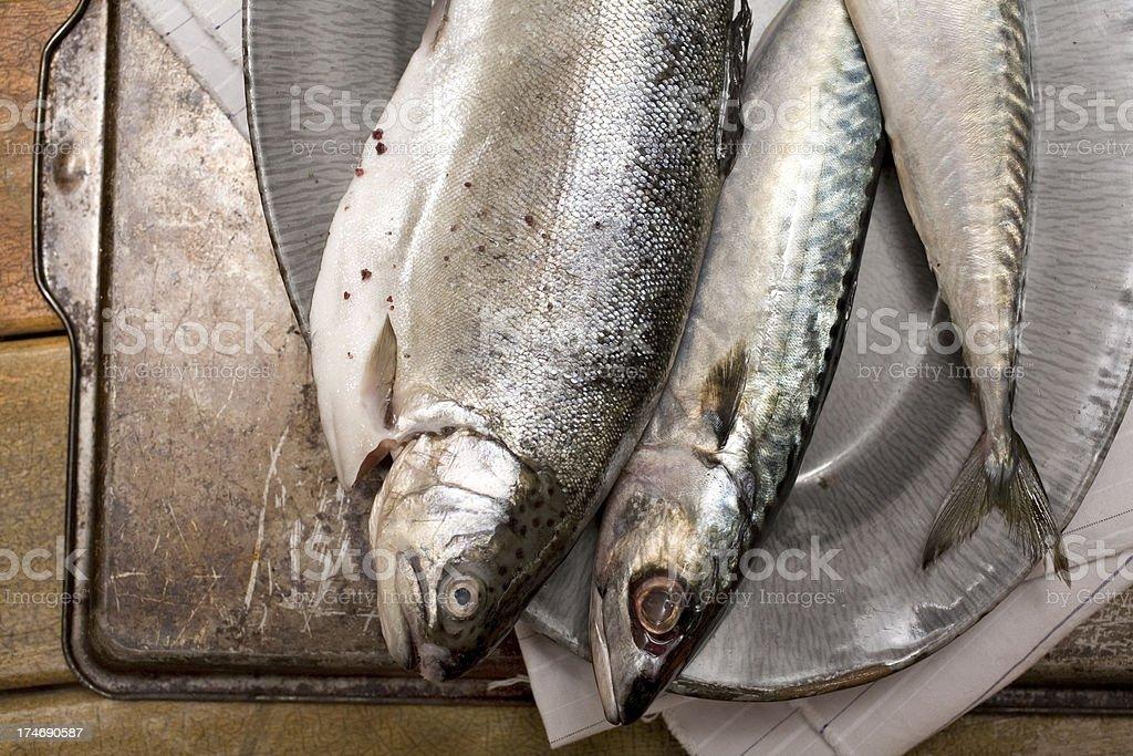 Three fish royalty-free stock photo