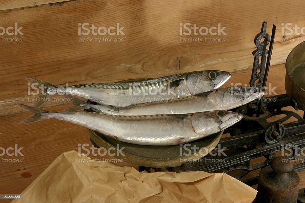 three fishes royalty-free stock photo