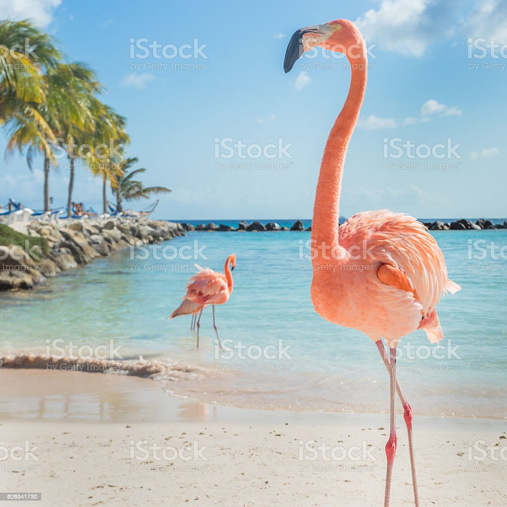 Three flamingos on the beach - foto de acervo