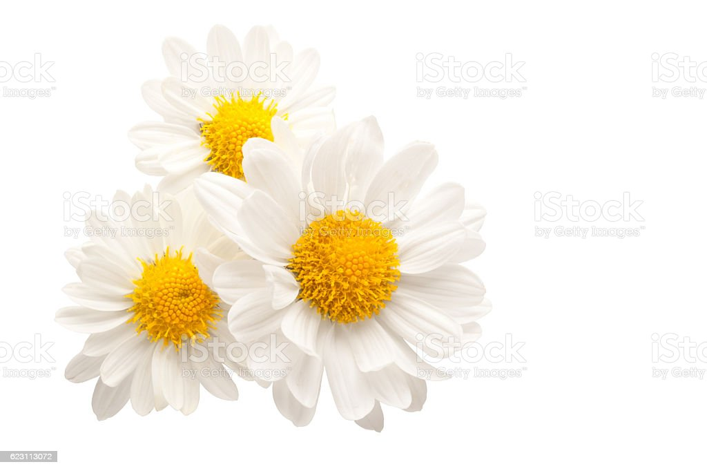 Three flowers isolated against white stock photo