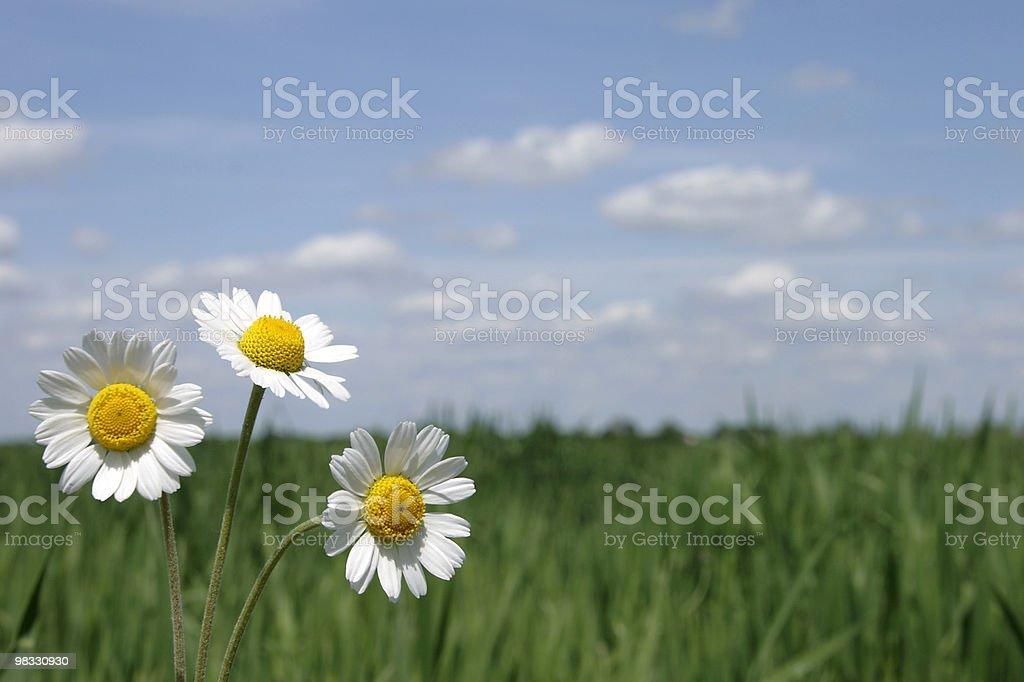 3 가지 꽃 royalty-free 스톡 사진