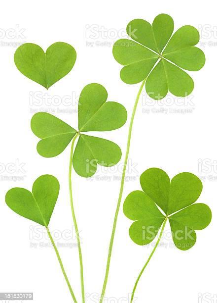 Three four leaf clovers picture id151530179?b=1&k=6&m=151530179&s=612x612&h=feecq2yjr4i56clicobqjvqg 7igwlmvzxu1som0zge=