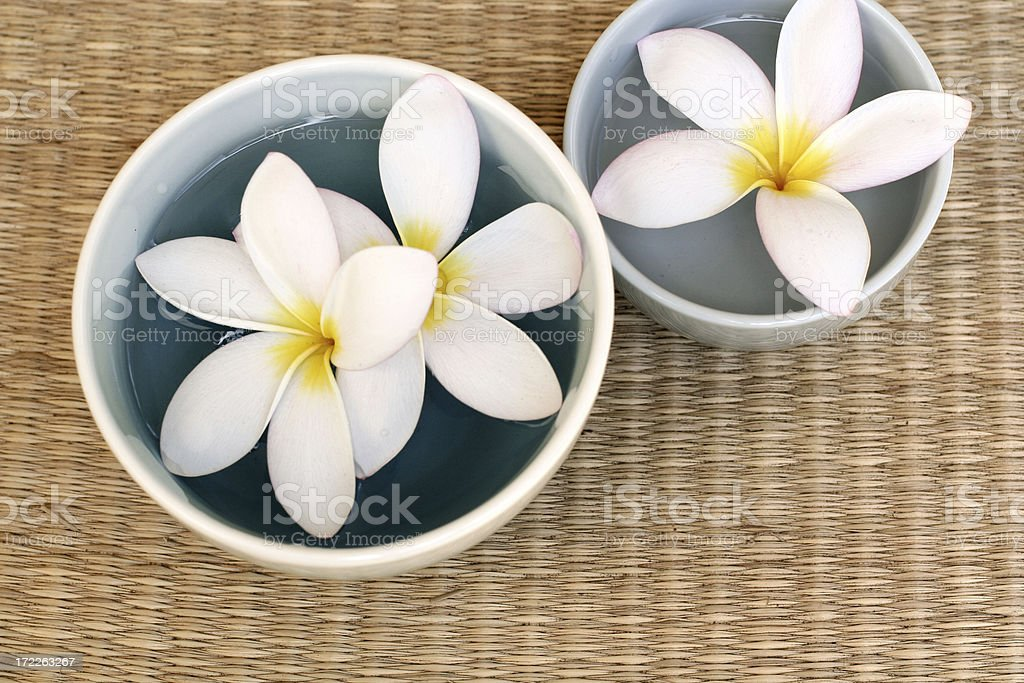 Three Frangipanies in bowl royalty-free stock photo