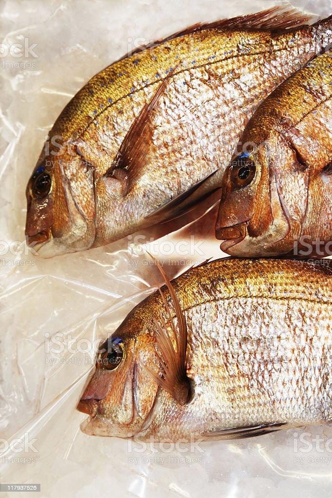 Three fresh  fishes royalty-free stock photo