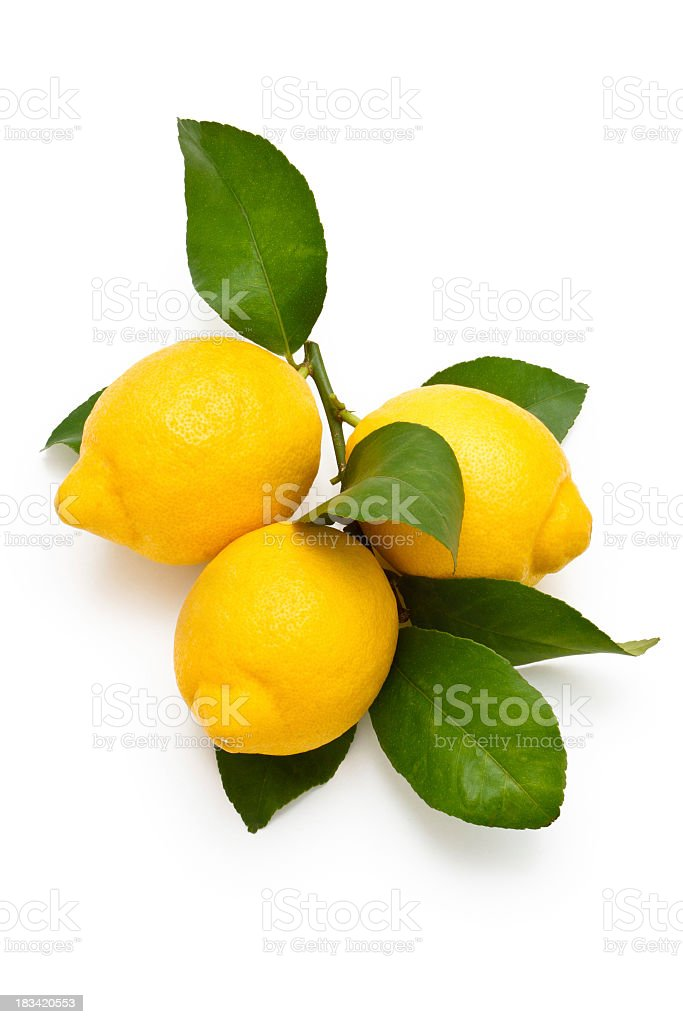 Three fresh lemons on a branch against white background stock photo