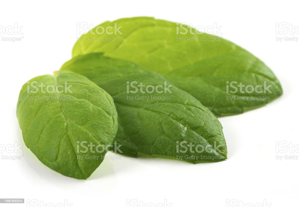 three fresh mint leaves royalty-free stock photo