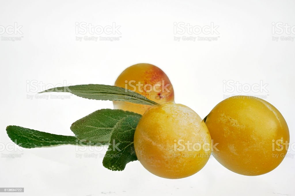three fresh yellow plums with green leaves stock photo
