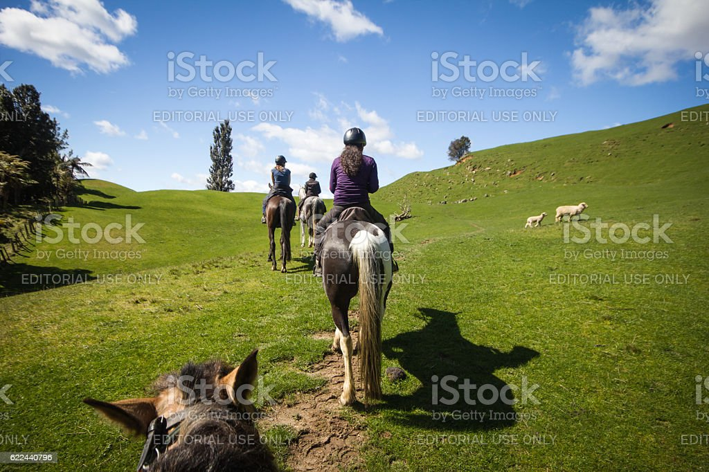 Three friends Horseback riding stock photo
