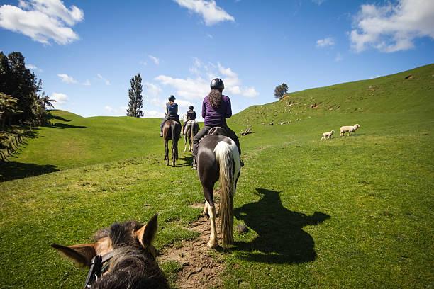 three friends horseback riding - equitación fotografías e imágenes de stock