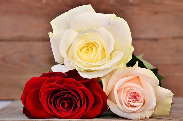 Three fullblown roses on wood background picture id466220468?b=1&k=6&m=466220468&s=612x612&w=0&h=db4vubhyblzcyabyc5 ovi6jxf4vizm5lkepiaajmkk=