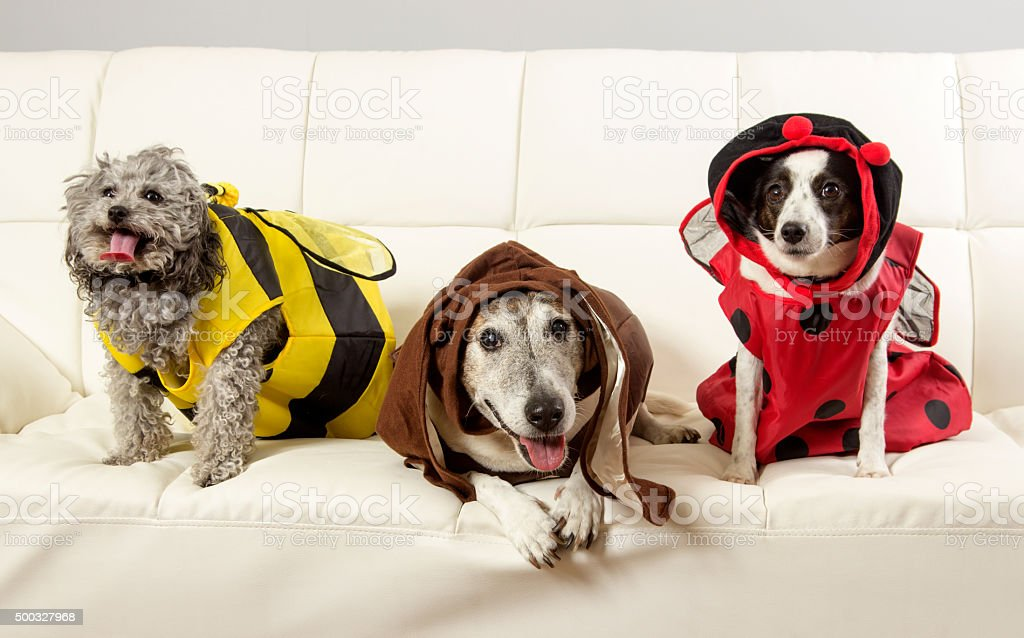 Three Funny Dogs stock photo