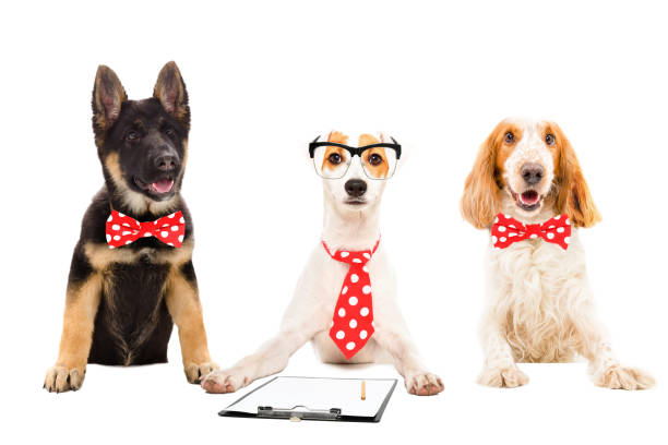 Three funny office dogs isolated on white background picture id1011729996?b=1&k=6&m=1011729996&s=612x612&w=0&h=6th97xkptvb89f6lshymixcsnnblokxwccnklf76 pw=