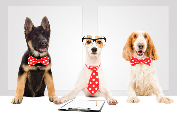 Three funny office dogs on the background of a banners picture id1154370964?b=1&k=6&m=1154370964&s=612x612&w=0&h=nz3m2ewi1b6u9 wnlfkhh2tmb5bykby0kaacwh40thk=