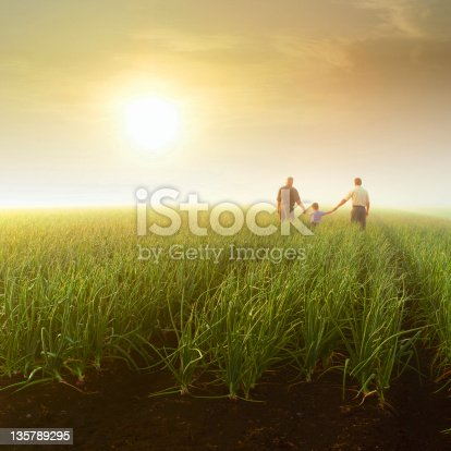 Grandfather, father & son at sunrise in onion field