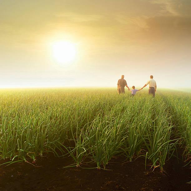 three generations (grandfather, son, grandson) holding hands in farm field - 族譜 個照片及圖片檔