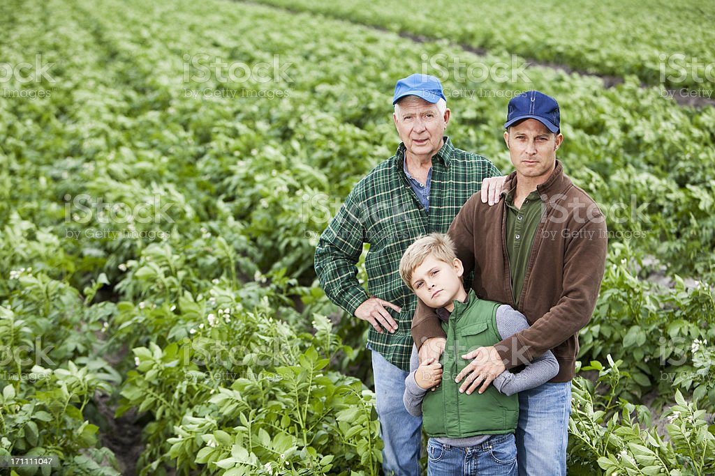 Three generations of men on family potato farm, in field Portrait of three generations of men working on the family farm.  The senior man, his adult son and grandson are standing together in a lush, green field of rows of potato plants.  The crops will be ready for harvest soon.  They are serious, looking at the camera, wearing hats, jeans and long-sleeved button-down plaid shirts. 40-49 Years Stock Photo