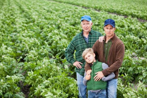 Three Generations Of Men On Family Potato Farm In Field Stock Photo - Download Image Now