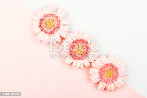 Three gerberas on pastel colors combination background. Flat-lay, top view. Copy space.