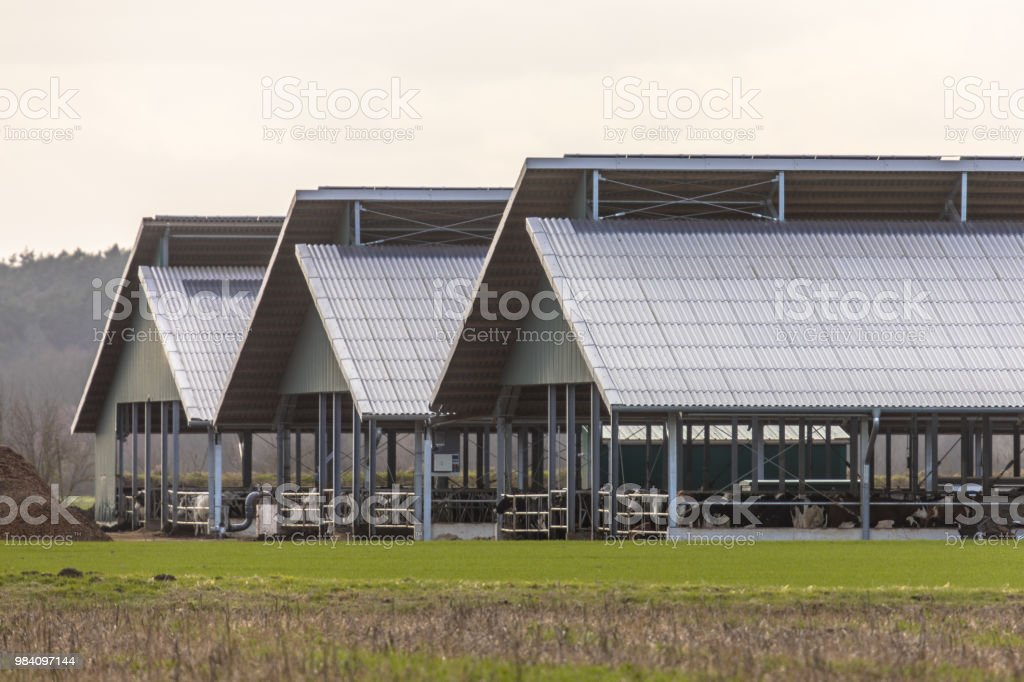 Three giant barns at factory farm stock photo