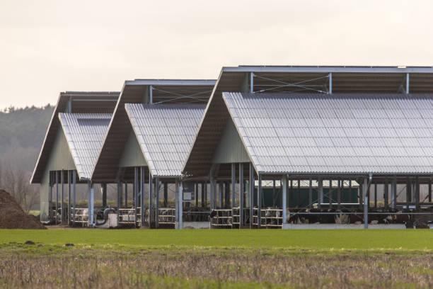Three giant barns at factory farm stock photo