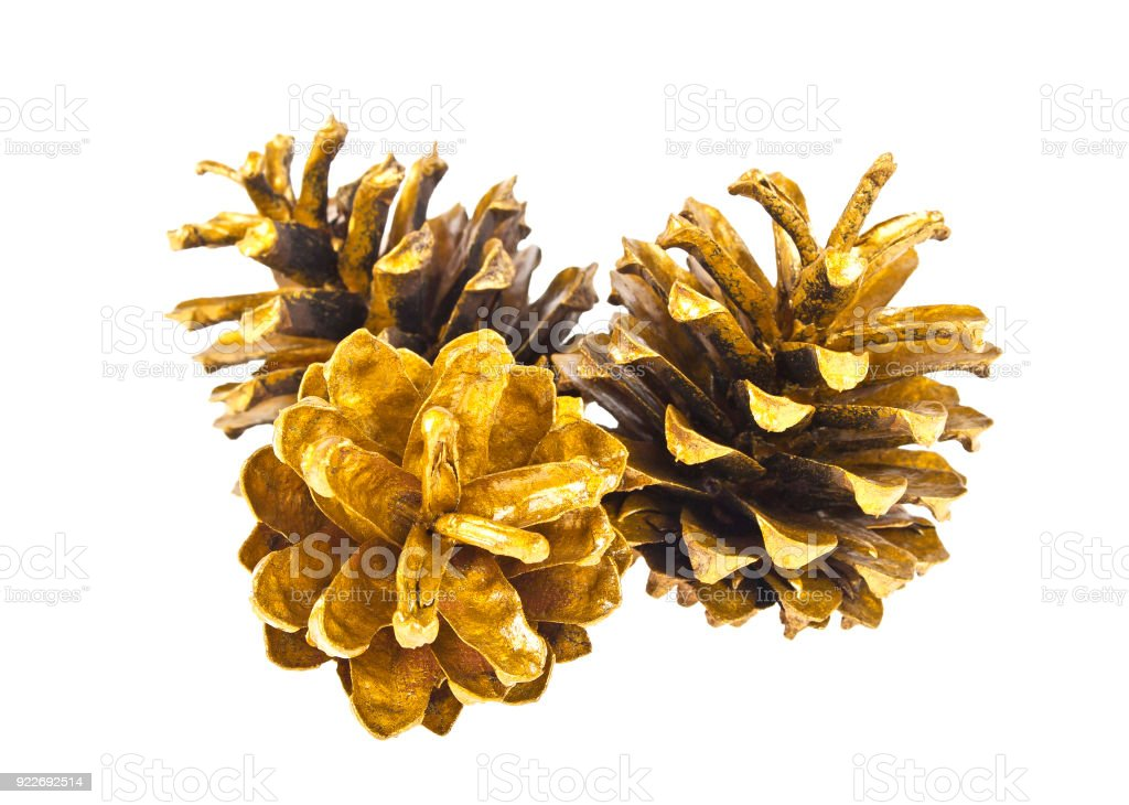three golden pine cones isolated on the white background stock photo
