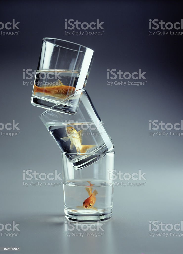 Three Goldfish in Stacked Glass Cups royalty-free stock photo