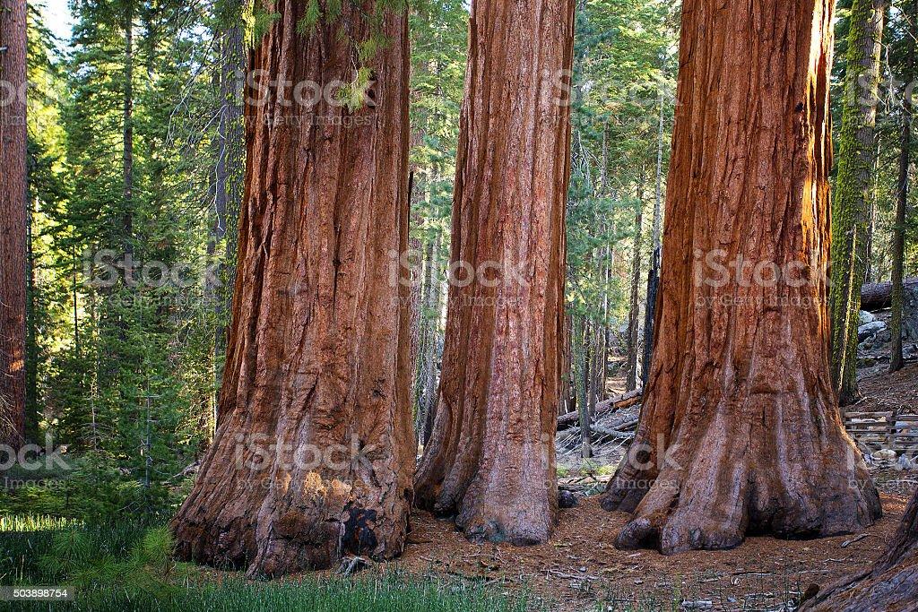 Three Graces, Yosemite stock photo